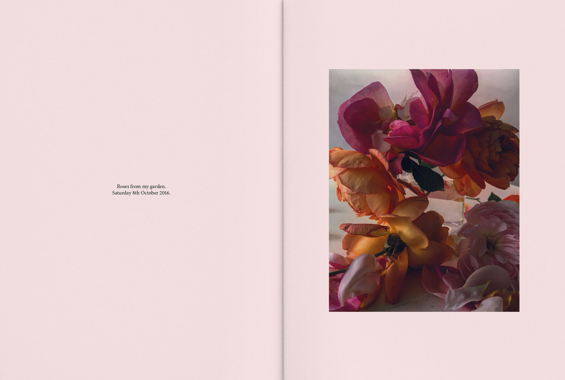 Carol Montpart Studio - The Plant Issue 10